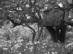 During Spring we were passing this Tree house and all the spring flowers caught my eye ..I had to take a picture of it..